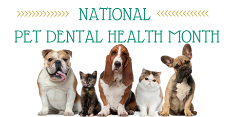 Pet Dental Health Months Are Back!